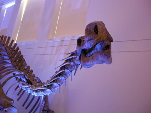 Australian Museum exhibits