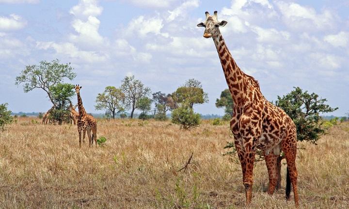 Картинки к природе африки