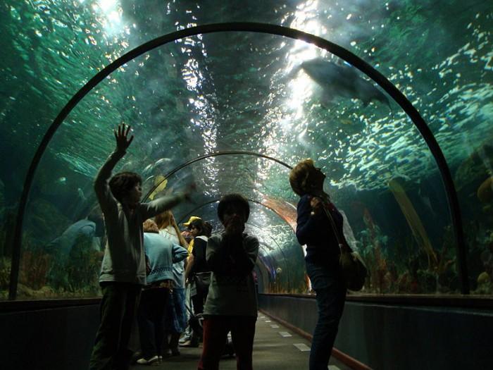 Океанариум в Тенерифе