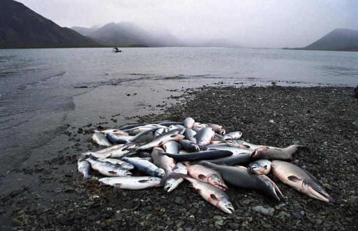 Северная рыбалка, фото Магадан