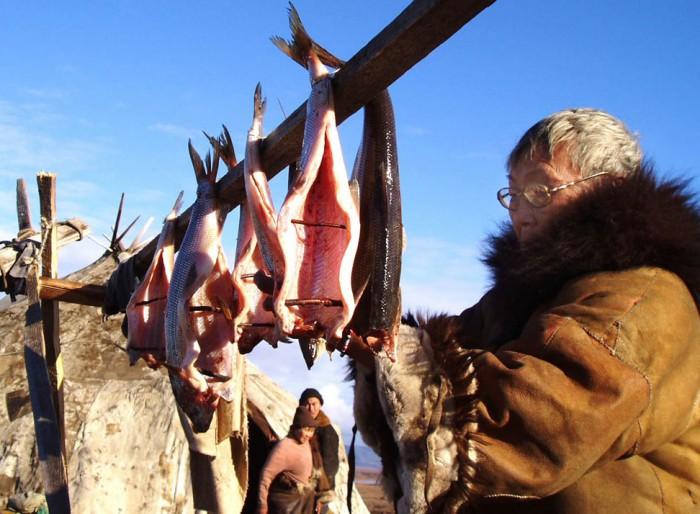 Вяление рыбы на Севере, фото Магадан