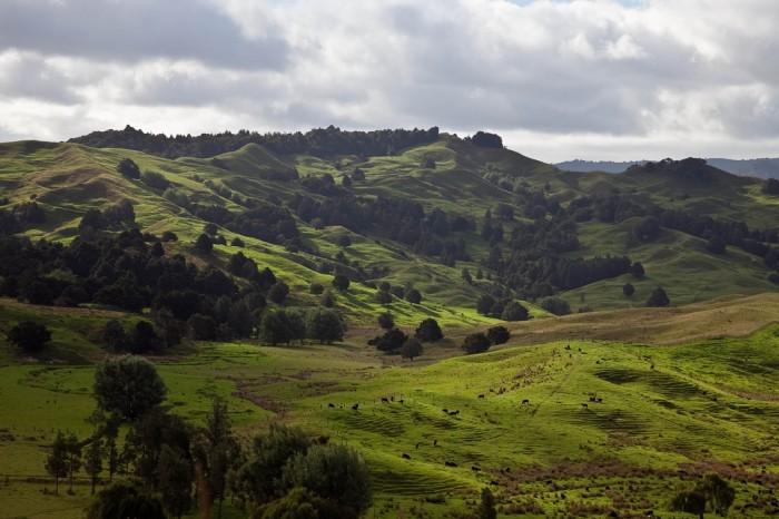 Новая Зеландия, фото  Ivan