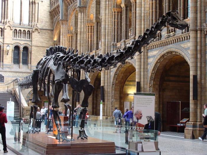 Скелет диплодока в музее натуральной истории, фото Drow male